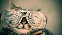 眼鏡をかけているネコ