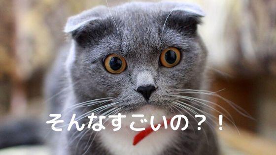 おどろくネコ